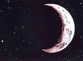 loup_lune