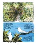 va'a,une saison aux tuamotu,flao,troub's,futuropolis,voyage,polynésie,pacifique,traditions,pirogue,voile,îles,610,112014